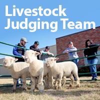 LLCC Livestock Judging Team